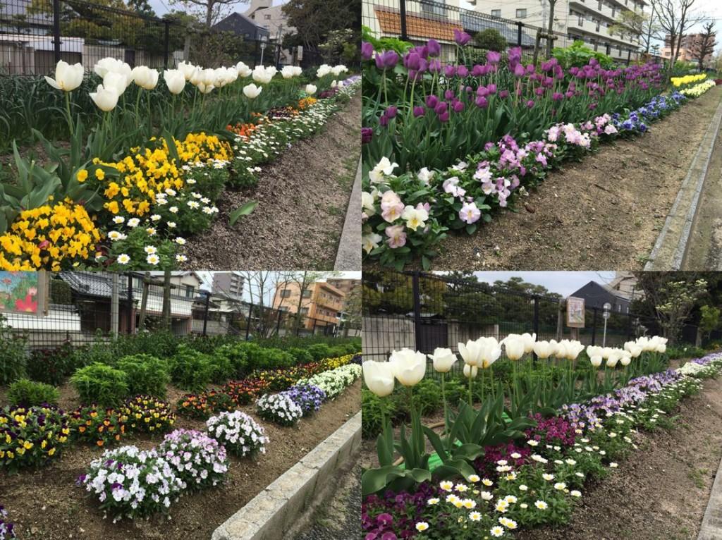 すてきな花の道